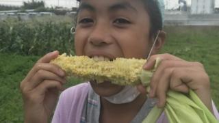 無農薬トウモロコシ生かじりスタート